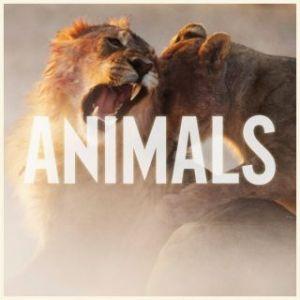 maroon_5_animals_single_cover